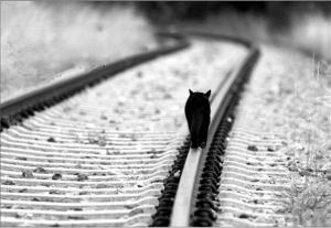gatto-binari