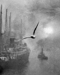 im-bill-brandt-seagull